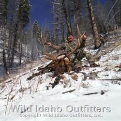 Very nice 7 x 7 bull elk.jpg