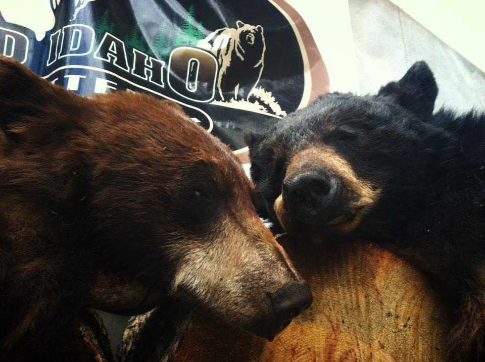 Idaho-Fall-Black-Bear-Hunts