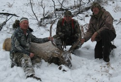 Wilderness Bull Elk, on Elk, Deer, Bear Combo Hunt